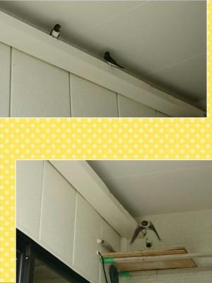 collage-1526607969026.jpg